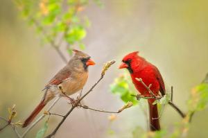 spring-cardinals-bonnie-barry